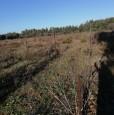 foto 2 - Terreno agricolo nell'agro di Uta a Cagliari in Vendita