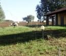 Annuncio vendita Magliano in Toscana terreno agricolo