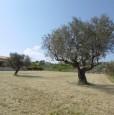 foto 5 - Nocciano terreno panoramico a Pescara in Vendita