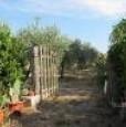 foto 5 - Grosseto uliveto con annesso agricolo a Grosseto in Vendita