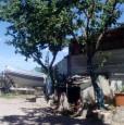 foto 4 - Grosseto uliveto con annesso agricolo a Grosseto in Vendita
