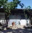 foto 3 - Grosseto uliveto con annesso agricolo a Grosseto in Vendita