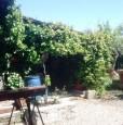 foto 2 - Grosseto uliveto con annesso agricolo a Grosseto in Vendita