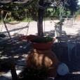 foto 1 - Grosseto uliveto con annesso agricolo a Grosseto in Vendita