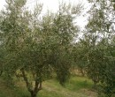 Annuncio vendita Santarcangelo di Romagna terreno agricolo
