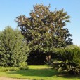 foto 9 - San Felice Circeo villa privata per vacanze a Latina in Affitto
