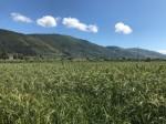 Annuncio vendita Sessa Aurunca frazione Carano terreno