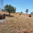 foto 4 - Terreno agricolo a Condofuri a Reggio di Calabria in Vendita