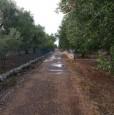 foto 3 - Latiano oliveto secolare in località Sardella a Brindisi in Vendita