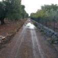 foto 2 - Latiano oliveto secolare in località Sardella a Brindisi in Vendita
