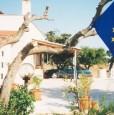 foto 16 - Alberobello azienda immersa in una selva di olivi a Bari in Affitto