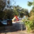 foto 2 - Alberobello azienda immersa in una selva di olivi a Bari in Affitto