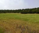 Annuncio vendita Alghero strada per Putifigari terreno agricolo