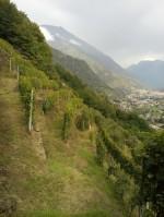 Annuncio vendita Tirano azienda vitivinicola