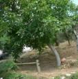 foto 4 - Fabbiano di Seravezza rustico a Lucca in Vendita