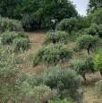 foto 2 - Agropoli terreno agricolo con rudere diruto a Salerno in Vendita