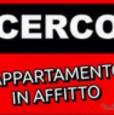 foto 0 - Bologna zona Corticella zona Lame cerco monolocale a Bologna in Affitto