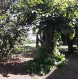 foto 7 - Poggio Renatico casa colonica a Ferrara in Vendita