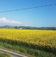 foto 3 - Fucecchio frazione San Pierino porzioni colonica a Firenze in Vendita
