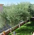 foto 15 - Budoni alloggio in villa a Olbia-Tempio in Vendita