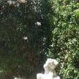 foto 1 - Villetta accesso sul mare zona blu San Vincenzo a Livorno in Affitto