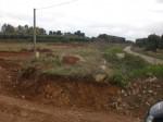 Annuncio vendita Novoli terreno agricolo