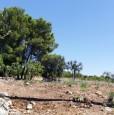foto 6 - Ceglie Messapica terreno con rustico a Brindisi in Vendita