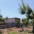 foto 5 - Ceglie Messapica terreno con rustico a Brindisi in Vendita