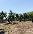 foto 4 - Ceglie Messapica terreno con rustico a Brindisi in Vendita