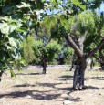 foto 3 - Ceglie Messapica terreno con rustico a Brindisi in Vendita