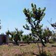 foto 2 - Ceglie Messapica terreno con rustico a Brindisi in Vendita