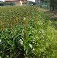 foto 0 - Feletto terreno edificabile a Torino in Vendita
