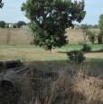foto 7 - Montefalco terreno agricolo edificabile a Perugia in Vendita