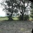 foto 1 - Montefalco terreno agricolo edificabile a Perugia in Vendita