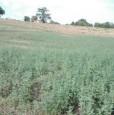 foto 0 - Montefalco terreno agricolo edificabile a Perugia in Vendita