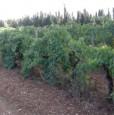 foto 6 - Olmedo terreno agricolo a Sassari in Vendita