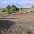 foto 4 - Olmedo terreno agricolo a Sassari in Vendita