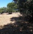 foto 4 - Pomezia terreno con rustico a Roma in Vendita