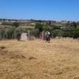 foto 3 - Pomezia terreno con rustico a Roma in Vendita