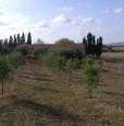 foto 5 - Olmedo strada vecchia per Sassari terreno agricolo a Sassari in Vendita