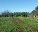 Annuncio vendita Ardea terreno agricolo con vigneto ed ulivi