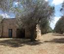Annuncio vendita Taurisano casa rurale