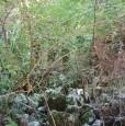 foto 3 - A Nimis zona Torlano bosco a Udine in Vendita