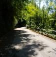 foto 1 - A Nimis zona Torlano bosco a Udine in Vendita