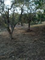 Annuncio vendita Gravina in Puglia uliveto