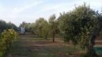 Annuncio vendita San Vincenzo annesso agricolo vicino al mare