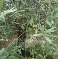 foto 7 - Magomadas terreno coltivato con casa rurale a Oristano in Vendita