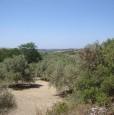 foto 4 - Magomadas terreno coltivato con casa rurale a Oristano in Vendita