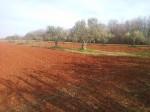 Annuncio vendita San Lorenzo di Umago fertile terreno agricolo