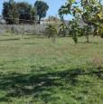 foto 3 - Fumone terreno agricolo olivato a Frosinone in Vendita